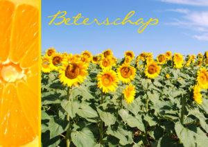 Beterschap zonnebloemen